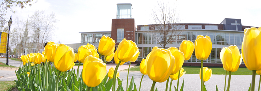 Yellow tulips outside of the Sakowich Campus Center
